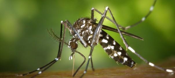 Entenda as diferenças entre Zyka e Dengue